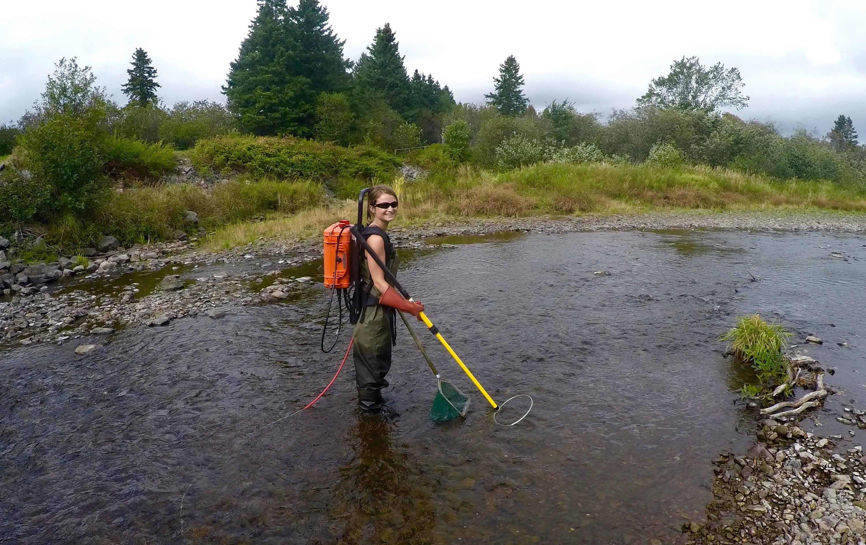 Electrofishing at Hillsdale