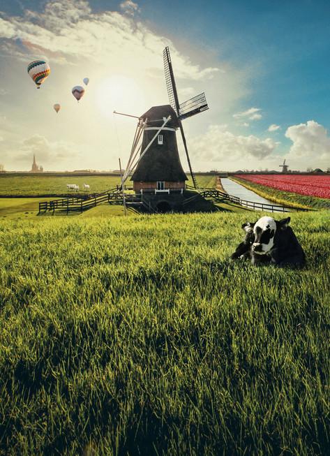 windmill-final-shemara.jpg