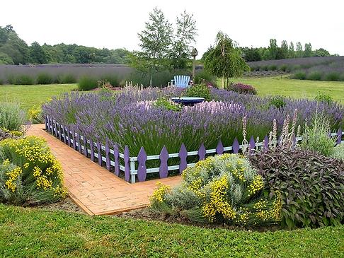 Lavender Garden.png