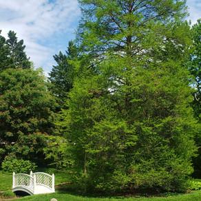 A Tree Grows in the Paca Garden, Part 5