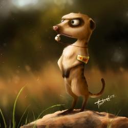 meerkat_20.png