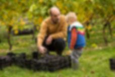Pruning the vines at East Meon Vineyard
