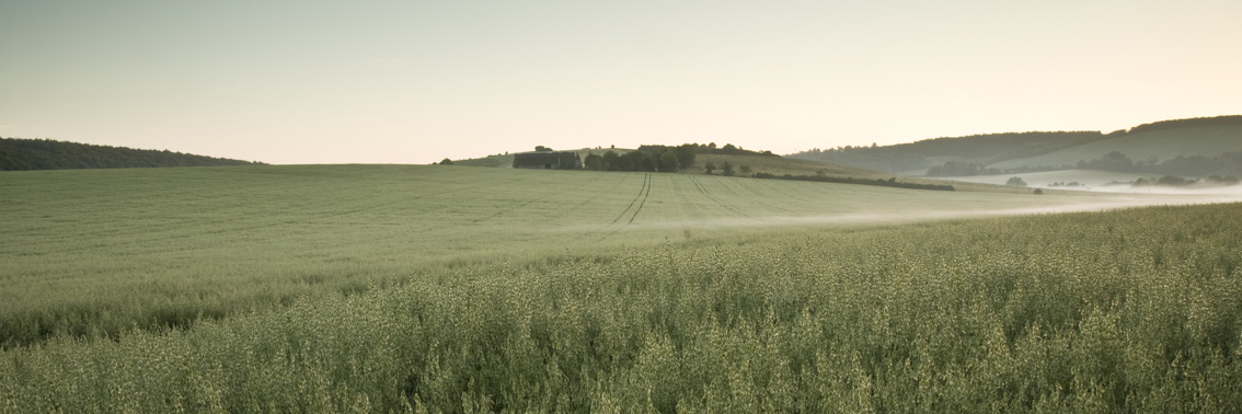 The rolling South Downs