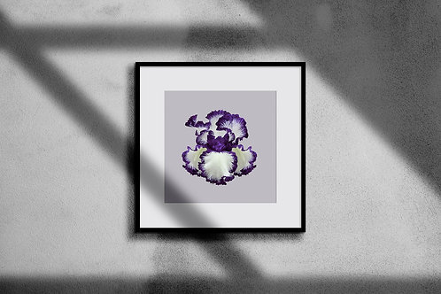 BEARDED IRIS WALL ART