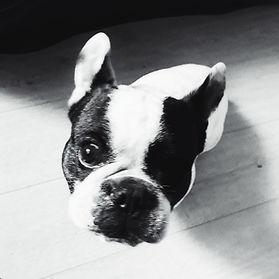 One eye dog