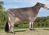 BFK55513 Top Acres Supreme Wisp2013.jpg