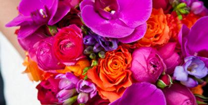 Pep's multicolore