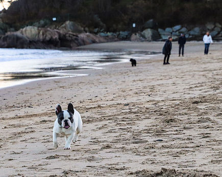 beachfrenchie.wix.jpg