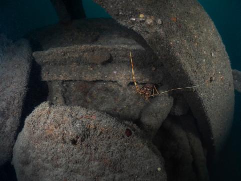 PCSM8403 Crawfish.jpg