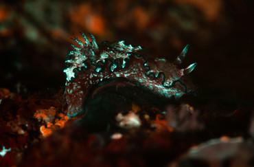 Fluorescent Sea Slug