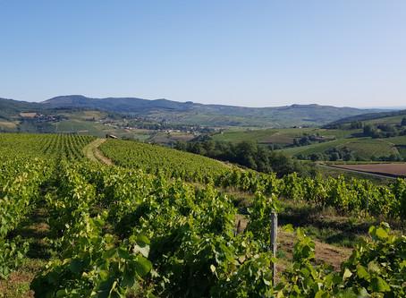 Un aperçu du vin nature du beaujolais