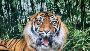 Who Has the Strongest Jaws in the Animal Kingdom? With Your Seattle, WA Family & General Dentist