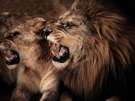 Who Has the Strongest Jaws in the Animal Kingdom? With Your Salem, OR Family & General Dentist