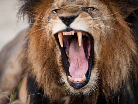 Who Has the Strongest Jaws in the Animal Kingdom? With Your Portland, OR Family & General Dentist