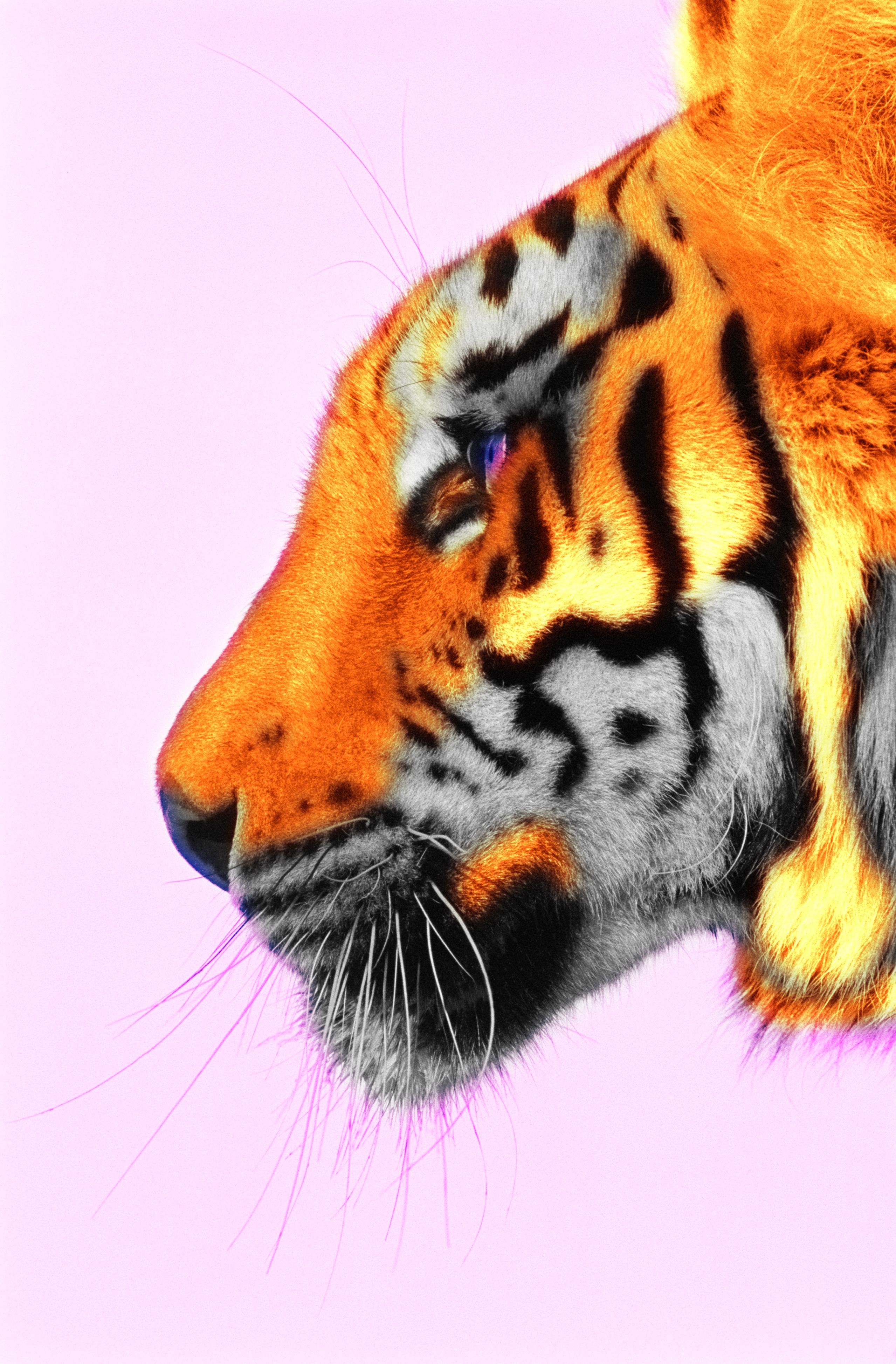 Tiger Spots