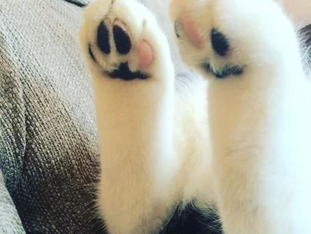 Cat Toes & Life Goals