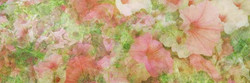 내 마음과 같은 150x50 _digital print_2016_10 edition-j
