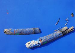 이정인|BLUE FISH 02