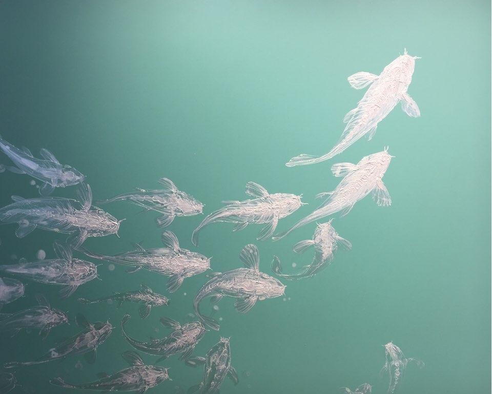 이호진|Of the carp swam(잉어의 유영)
