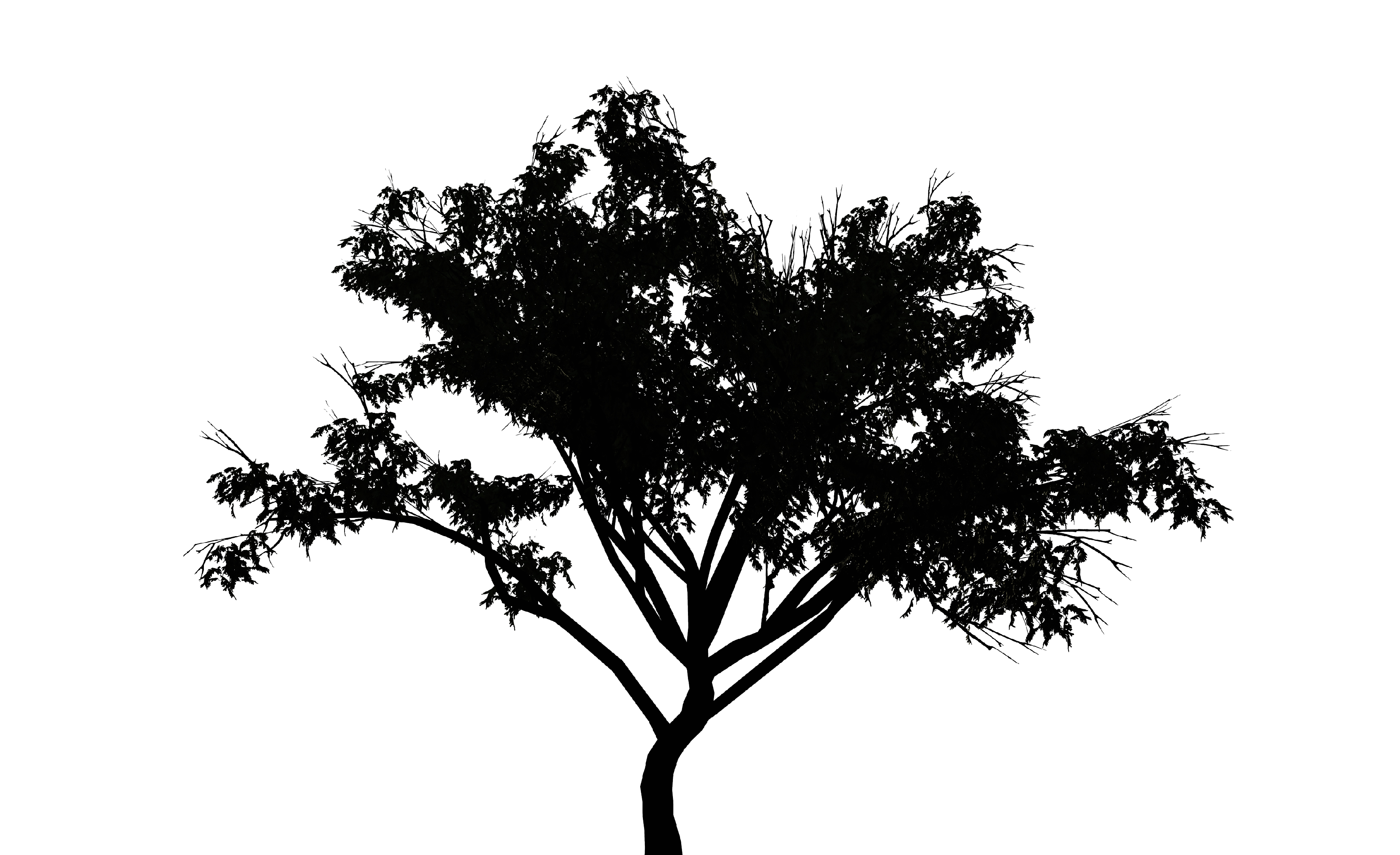 흰 바람벽이 있어-백석_-검은 나무_영상 3분 30초 (loop)_2016
