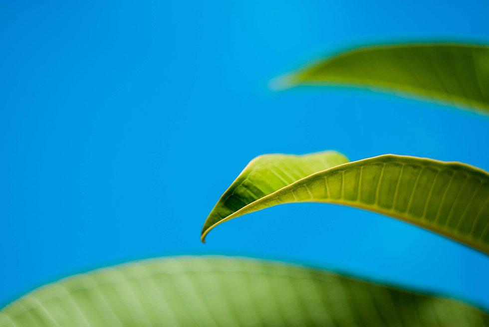 leaf-3828499.jpg