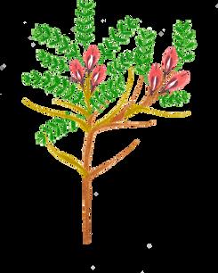 Fleur 2 - Astragale.png