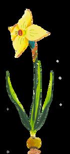 Fleur 4 - Narcisse.png