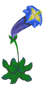 Fleur 5 - gentiane acaule.png