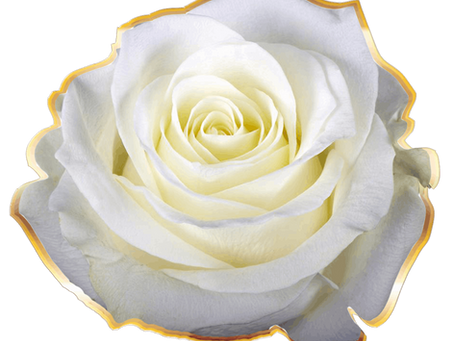 12 Days of Free Sisterhood of the Rose Initiations