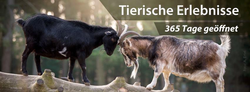 Natur nah erleben im Wildpark Schwarze Berge!