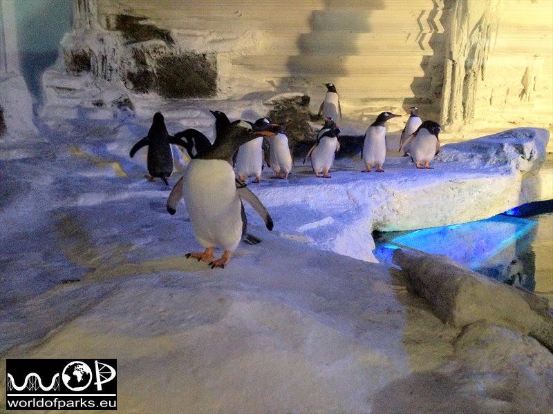 Sea Life Abenteuer Park Oberhausen – Einzug der Pinguine 2013