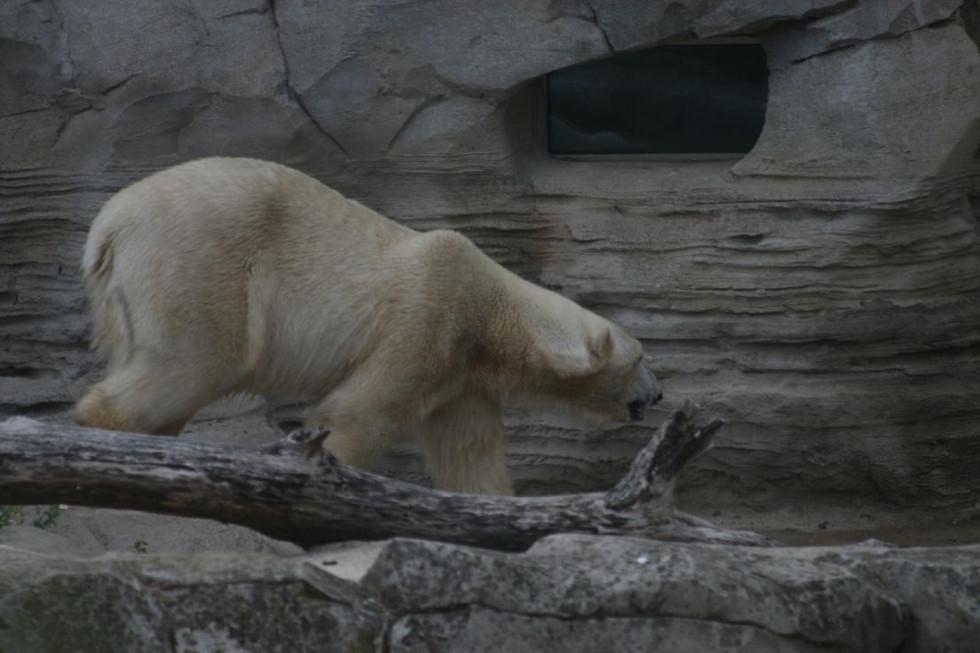 Zoo am Meer – Saison 2011