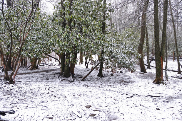 Day12: The Frozen North... Carolina