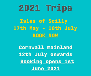 trip opening 2021.png
