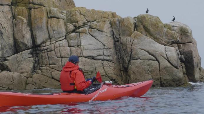 Sea kayaking with wildlife