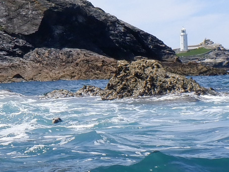 A seal-eye view of Godrevy lighthouse