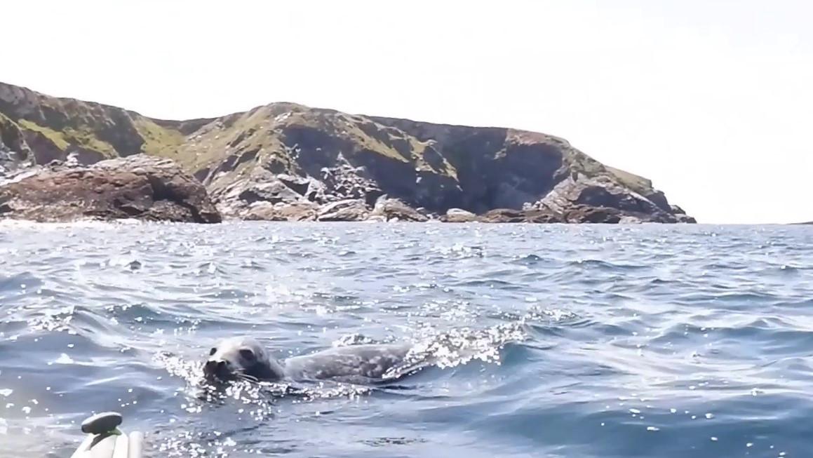Seal photo.jpg