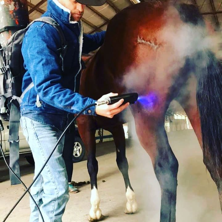 Equine Recovery