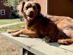 picnic table dog