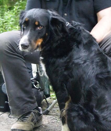 TaSunka Wotagla Super Service Dog