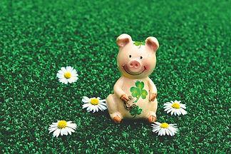 lucky-pig-3838173_1920.jpg