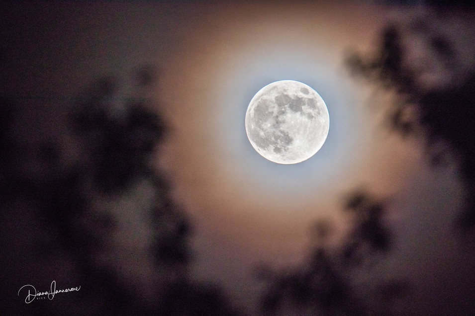 The Unique Faces of the Moon Series (4)