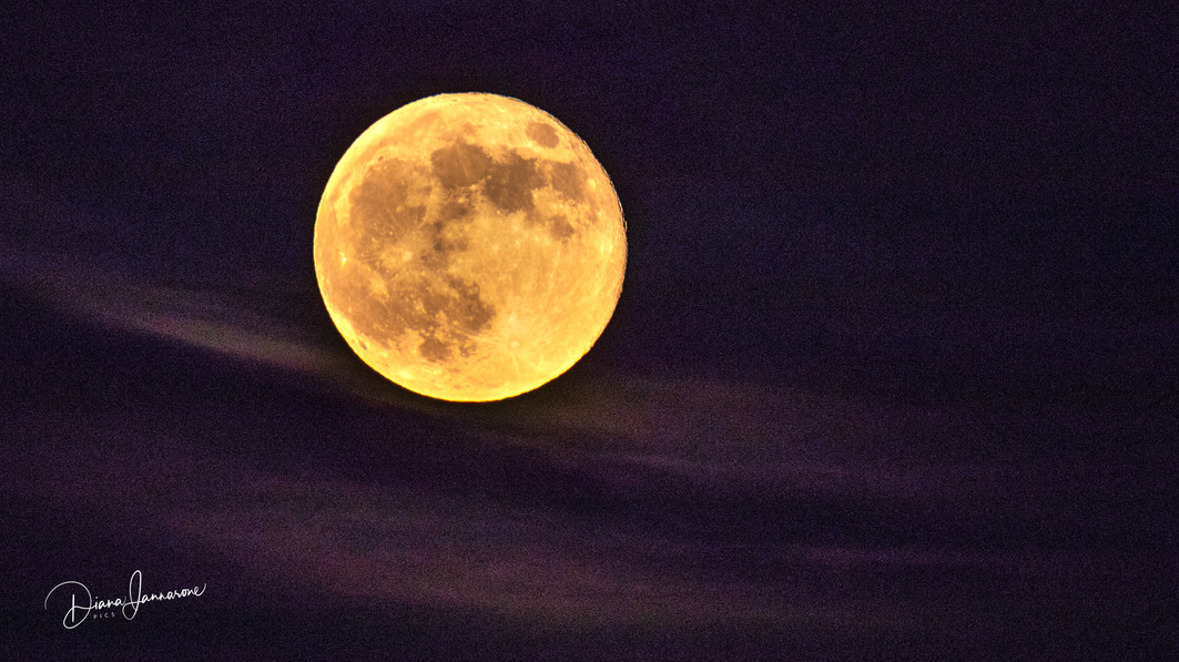 Blood Moon Embraced in Lavender Hues