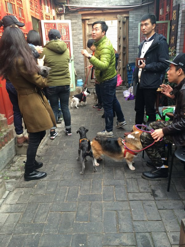 An IHomo event in Beijing invited gay men and women to bring their pets (Simina Mistreanu/IBTimes UK)