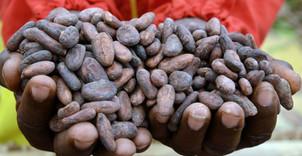 Commerce/Afrique: Cocobod du Ghana reçoit un prêt de 300 millions$ pour refinancer les obligations c