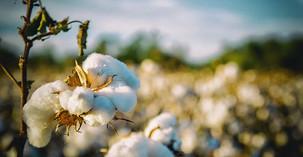 Commerce: Filière Coton, 4 pays africains discutent des nouvelles perspectives pour l'avenir