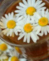 chamomile-829220_1920.jpg