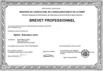 Brevet professionnel éducateur canin Hérault