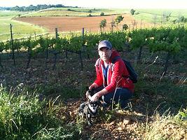 Balade chiens Montpellier