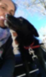 bisous de chien